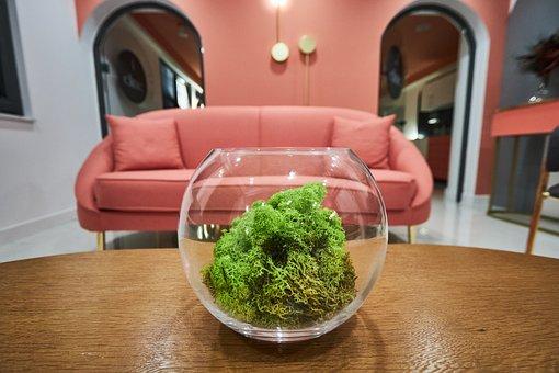 Decor, Decoration, Glass Bowl, Ecology, Green Living