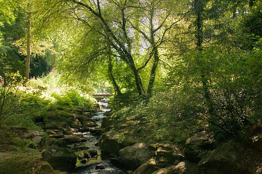 Forest, River, Trees, Leaves, Foliage, Rocks, Stream