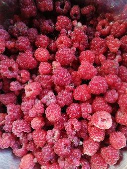 Raspberries, Fruit, Organic, Harvest, Healthy