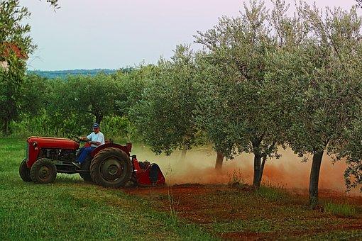Tractor, Vehicle, Machine, Machinery, Olive, Trees