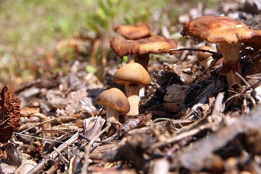 Mushrooms, Nature, Forest, Fungi