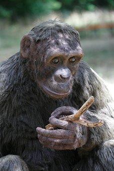Ape, Nature, Primate, Animal, Sitting