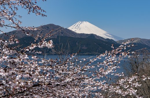 Mountain, Volcano, Snow, Trees, Flowers, Branches