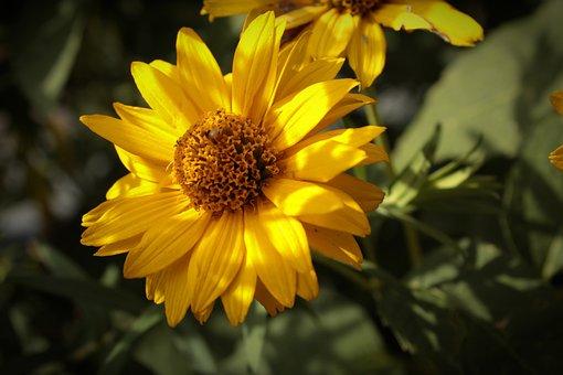 Flower, Petals, Blossom, Stem, Leaves, Foliage, Flora