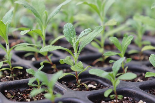Seedling, Grow, Plant, Sustainable, Sustainability