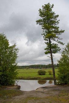 Tree, River, Bridge, Landscape, North, Cliff