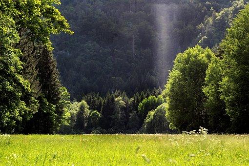 Forest, Trees, Meadow, Field, Grass, Landscape, Light