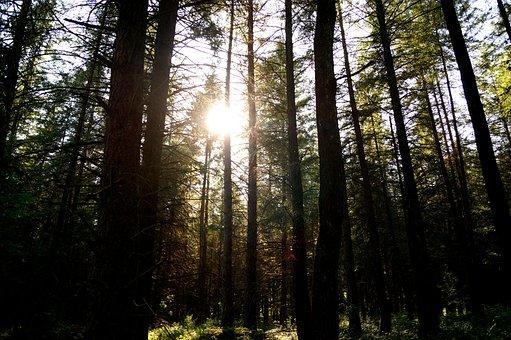 Forest, Trees, Nature, Landscape, Sun, Woods, Serene