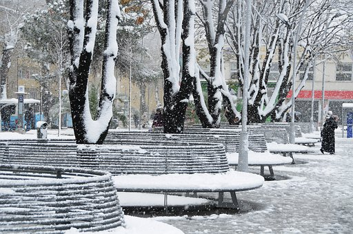 Winter, Snow, Nature, Cold, Tree, Snowy, Park Bench