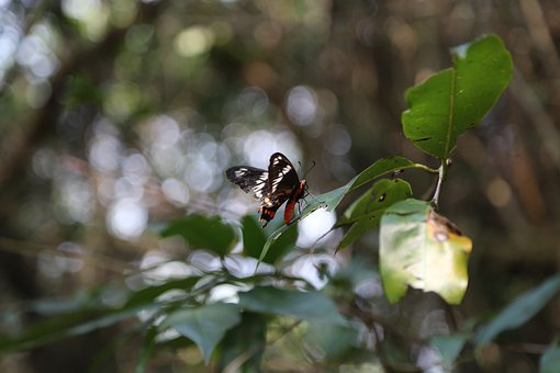 Butterfly, Insect, Bug, Wings, Animal, Tree, Branch