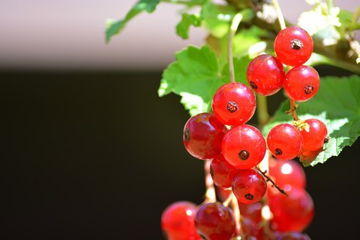 Berry, Currant, Red, Nutrition, Healthy, Sweet