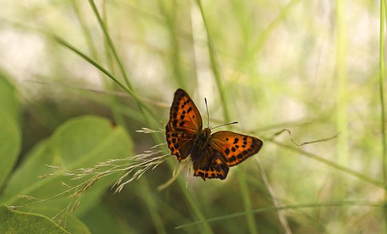 Butterfly, Insect, Bug, Wings, Antenna, Grass, Leaves
