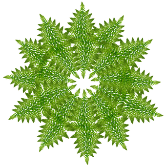 Snowflake, Ferns, Pattern, Texture, Decoration, Design