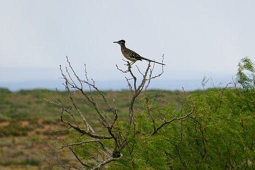 Bird, Beak, Plumage, Feathers, Avian, Branch, Tree