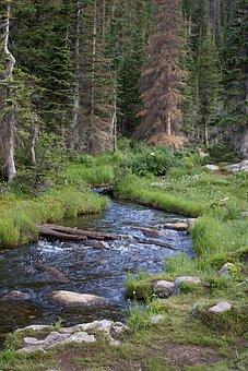 River, Stream, Forest, Trees, Rocky, Mountain, Colorado
