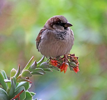 Bird, Sparrow, Perched, Cute, Wildlife, Plant, Garden