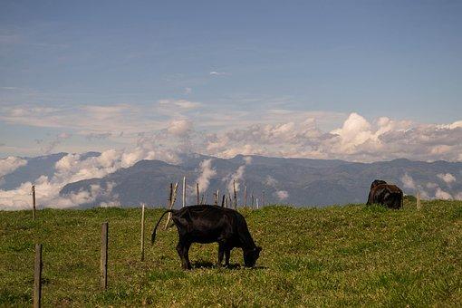 Cow, Animal, Mountain, Sun, Clouds, Dream, Sky, Nature
