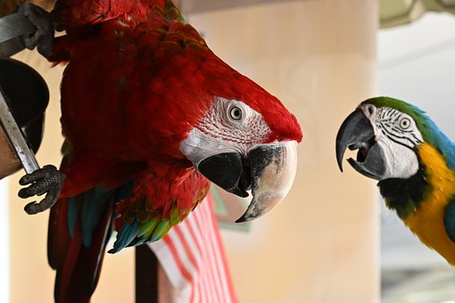Birds, Parrots, Beak, Feathers, Plumage, Colorful, Zoo