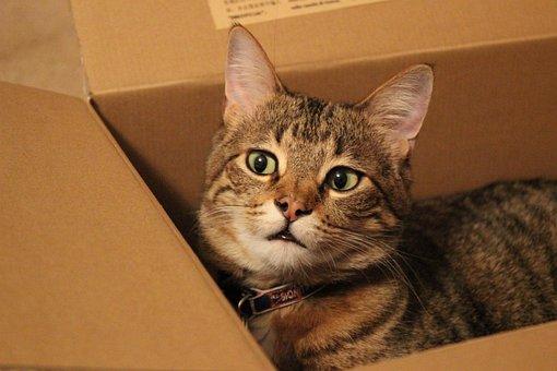 Cat, Feline, Animal, Kitty, Box, Cardboard Box