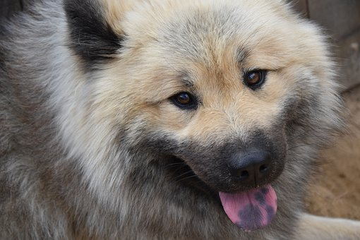 Dog, Pet, Domestic, Canine, Mammal, Animal, Breed