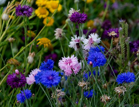 Flowers, Petals, Field, Meadow, Colorful