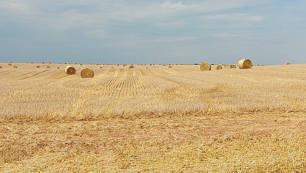 Straw Rolls, Straw Bales, Field, Harvested
