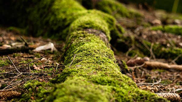 Moss, Tree, Forest, Leaves, Foligae, Ground, Nature