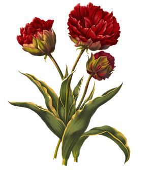 Tulips, Vintage, Red, Flowers, Nature, Decorative