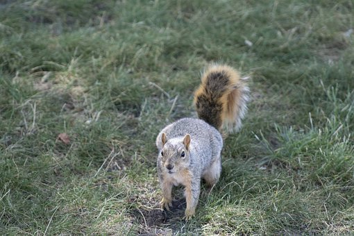 Chipmunk, Squirrel, Rodent, Grass, Outdoors, Nature