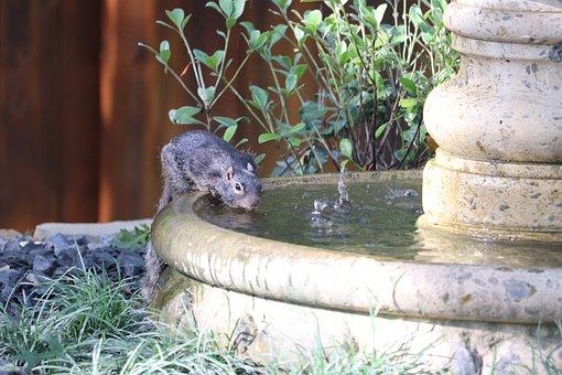 Squirrel, Chipmunk, Rodent, Fountain, Water, Animal