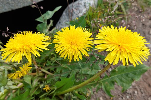 Flowers, Petals, Street, Asphalt, Weeds, Grass