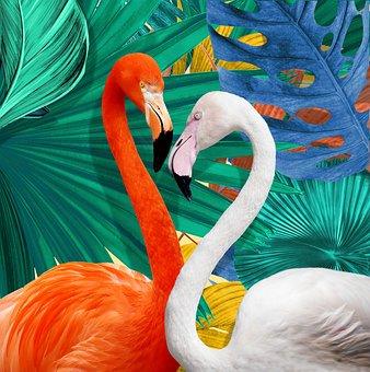 Flamingo, Bird, Colorful, Feathers, Art, Beak, Neck