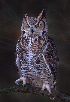 Great Horned Owl, Owl, Bird, Fowl, Portrait, Fauna