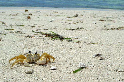 Crab, Crustacean, Beach, Sand, Shore, Tropical, Cay