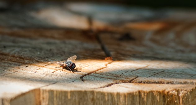 Fly, Wings, Insect, Bug, Wood, Log, Trunk