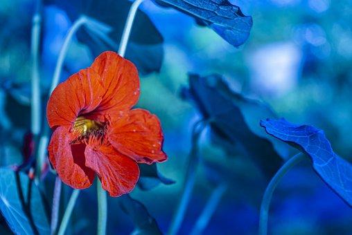Flower, Petals, Biology, Flora, Botanica, Nature