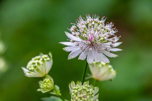 Flower, Petals, Bud, Close Up, Nature, Blossom, Bloom