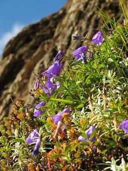 Flower, Plant, Natural, Alpine Plants, Meadows