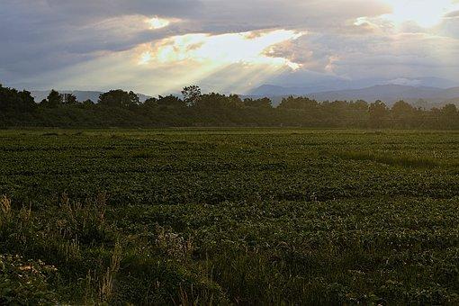 Field, Meadow, Grass, Trees, Sunset, Sun Rays, Green