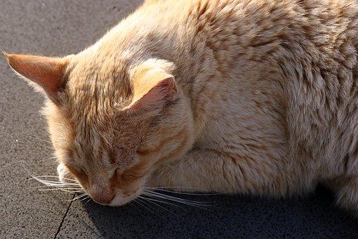 Cat, Rudy, Dream, Tomcat, Kitten, Charming, Fur, Animal