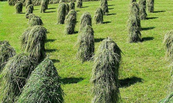 Hay, Alpine, Meadow, Dry, Pyramids, Zillertal, Austria
