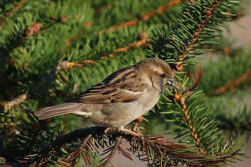 Himself, Animal, Background, Beak, Bird, Branch, Brown