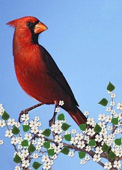 Cardinal Male, Flowering Branch, Carddigital, Art