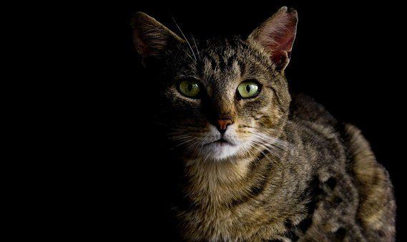 Cat, Cat In The Dark, Eyes, Staring, Watching, Dark