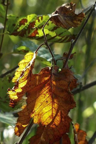 Foliage, Autumn, Nature, Fall, Leaves, Colorful