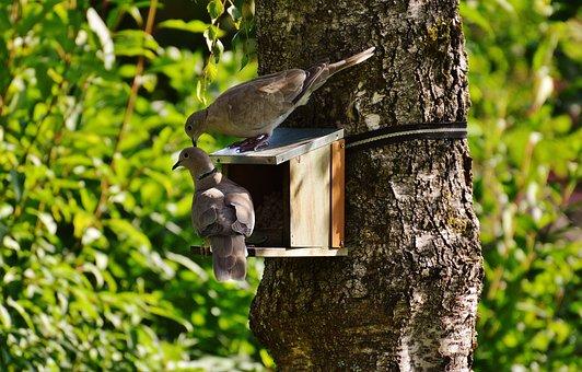 Aviary, Pigeons, Birds, Feather, Fly, Food, Feeding