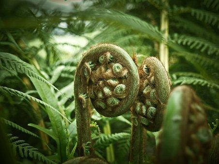 Palm Fern, Fern, Plant, Flora, Green, Botanical Garden