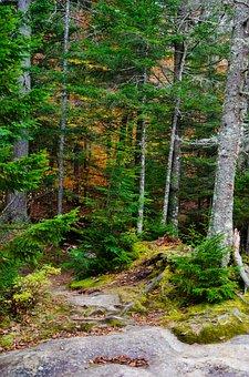 White Mountains, Fall, Tree, White, Forest, Park