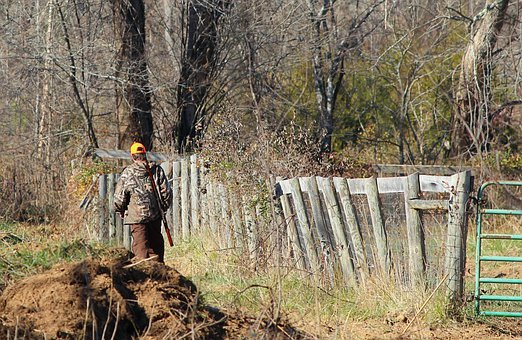 Hunter, Deer Hunting, Rifle, Camouflage, Hunt, Gun