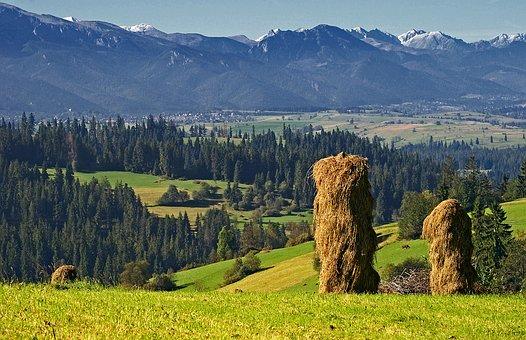 Haymaking, Harvest, Kopki Hay, Stacks Of Hay, View